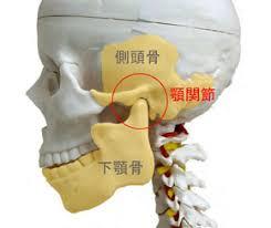 側頭骨の画像